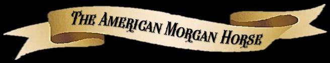 American Morgan Horse banner