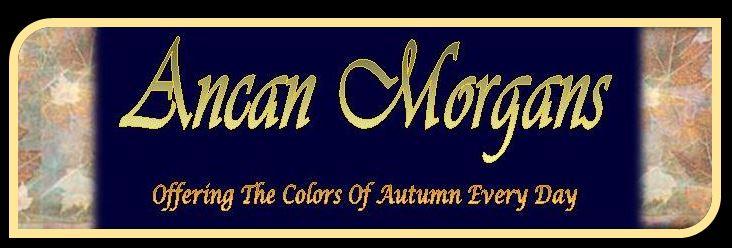 Ancan Logo