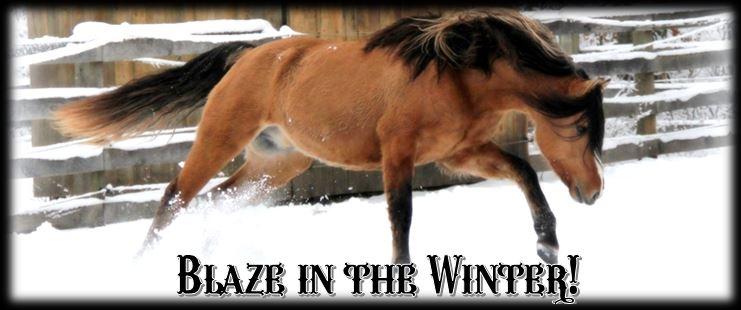 Blaze winter header