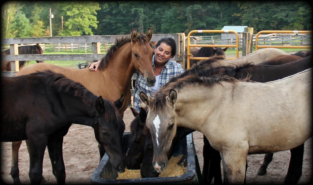 Foals 17 6.jpg1