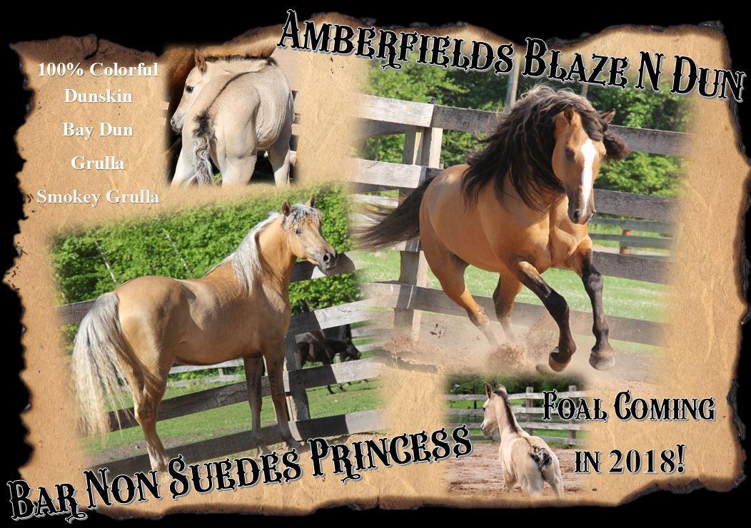 Foals 2018 Princess1