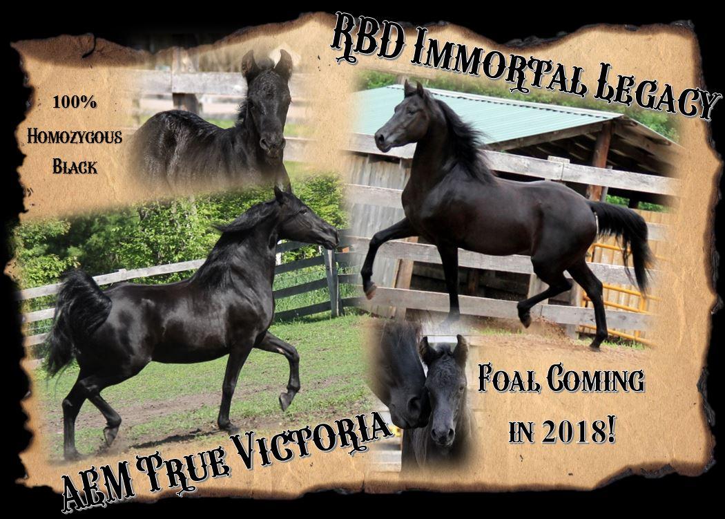 Foals 2018 Victoria
