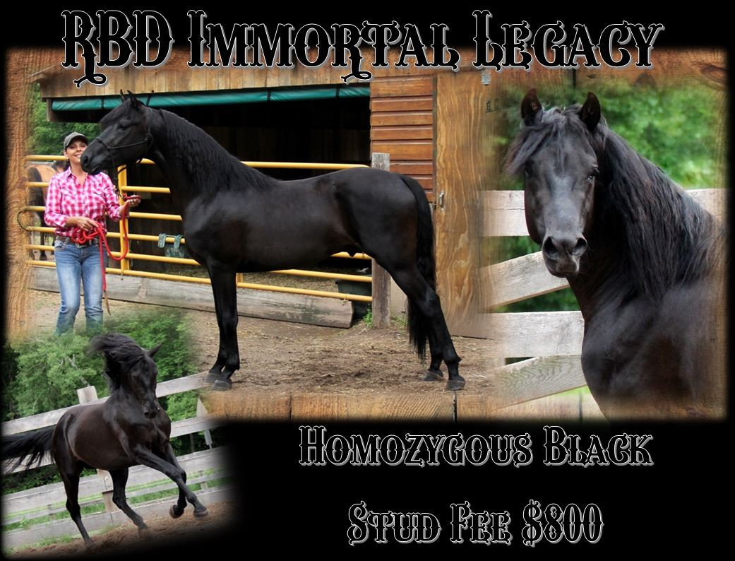 Legacy stallion page2.JPG1