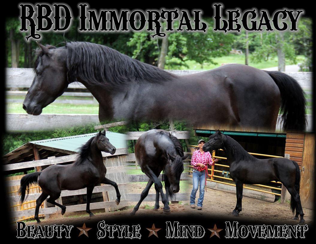 Legacy stallion page3.JPG2