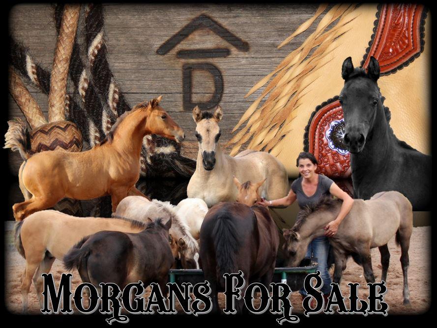 Morgans for sale 1