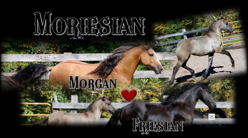 Moriesian foal2.JPG1