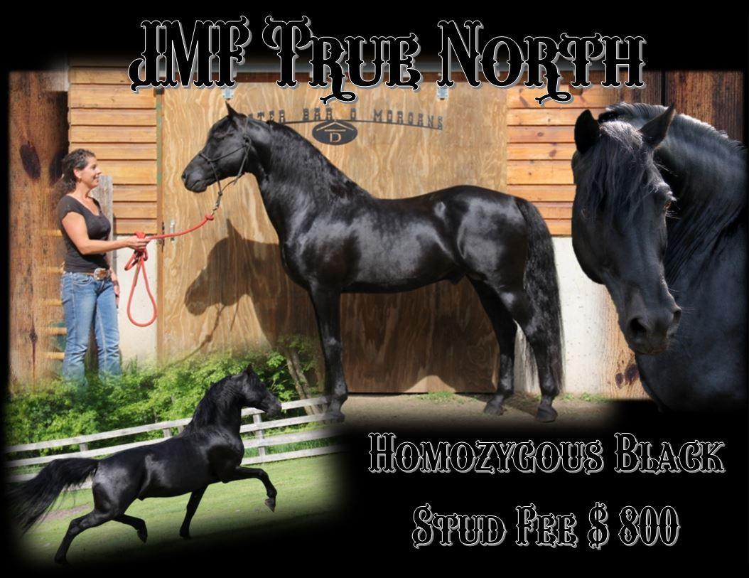 North Stallion page 2.JPG1