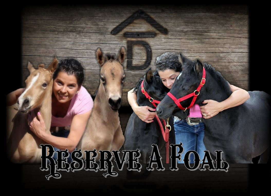 Reserve A Foal2 1