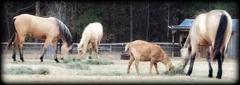 Bonnie's herd3.jpg2