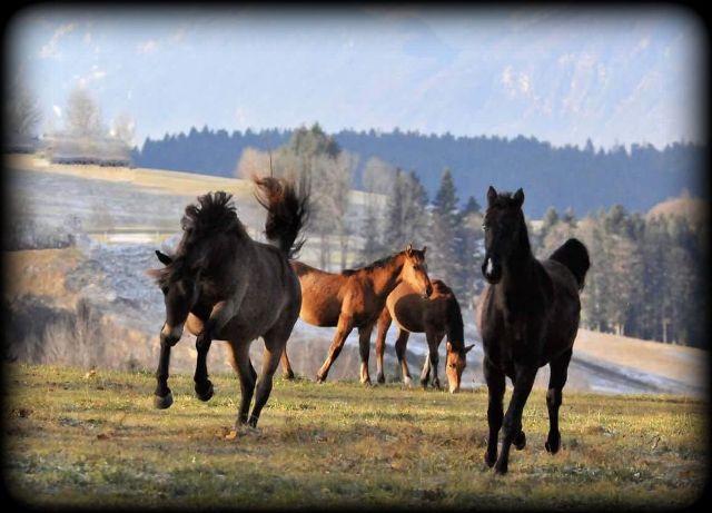 Elke horses1