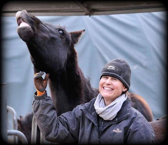 Elke horses2