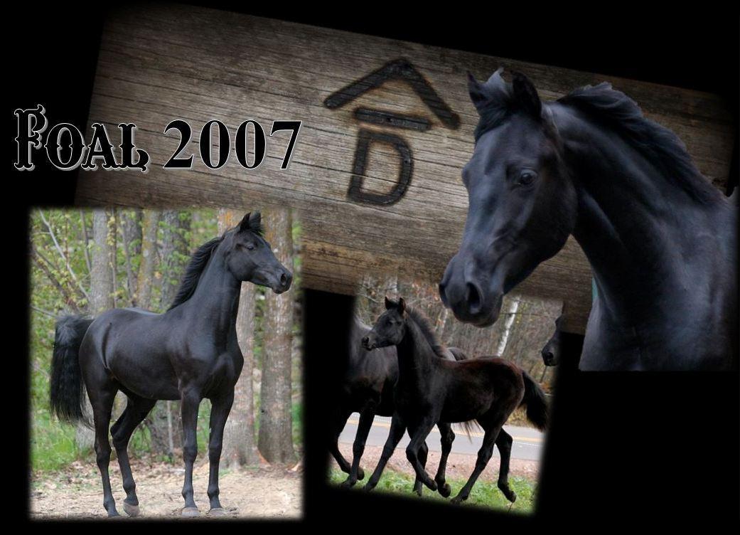Past Foals 2007