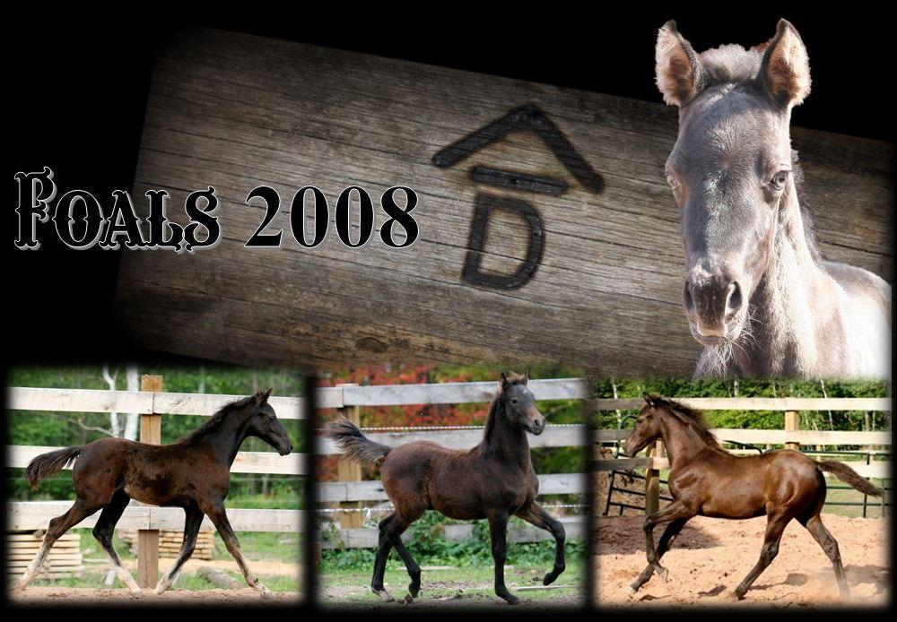 Past Foals 2008