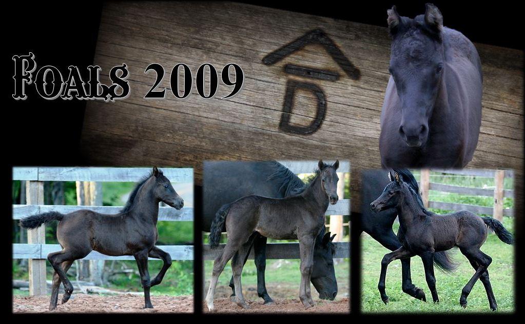 Past Foals 2009