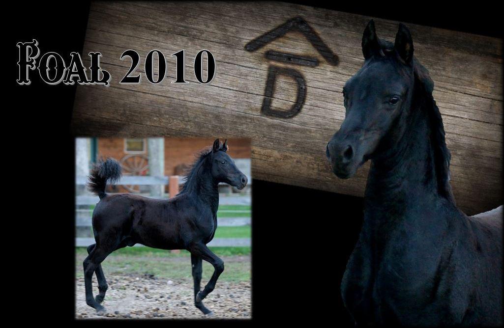 Past Foals 2010