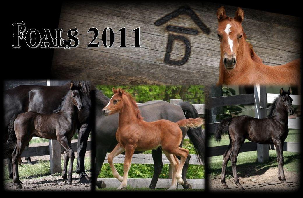 Past Foals 2011 1