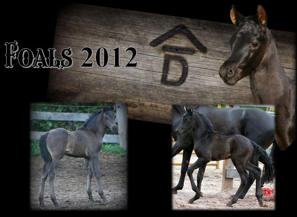 Past Foals 2012 1