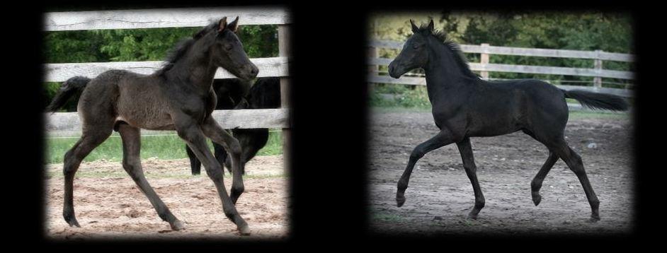 Past Foals 2012 2