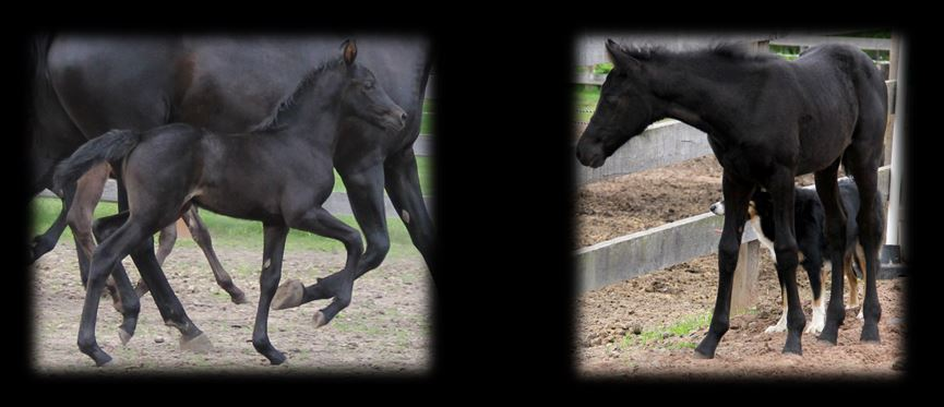 Past Foals 2013 2