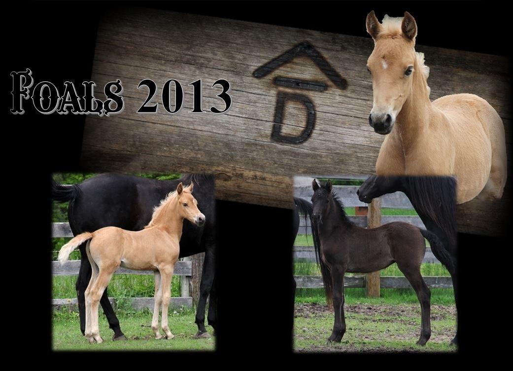 Past Foals 2013
