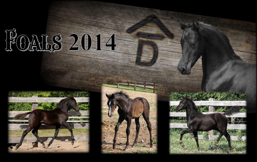 Past Foals 2014