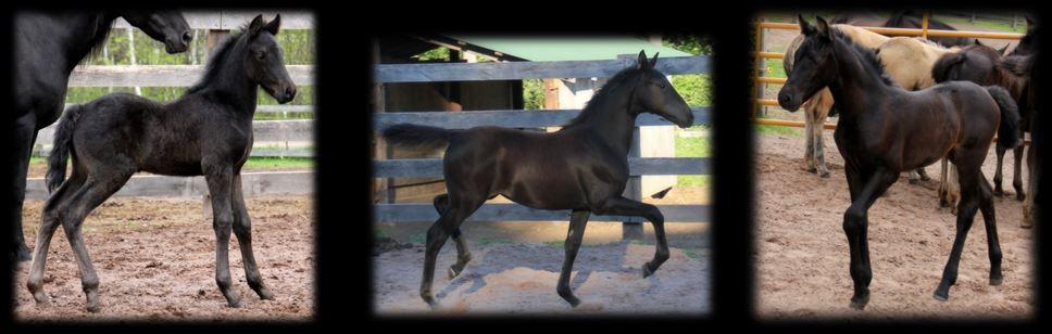 Past Foals 2015 2
