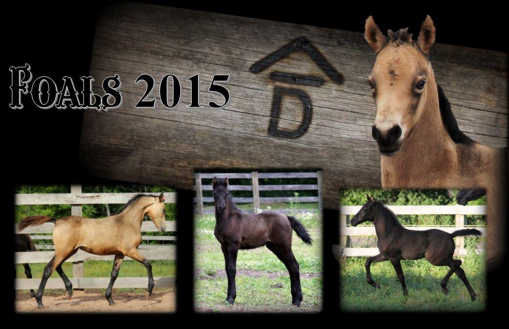 Past Foals 2015