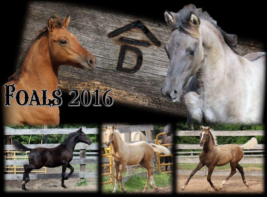 Past Foals 2016 01