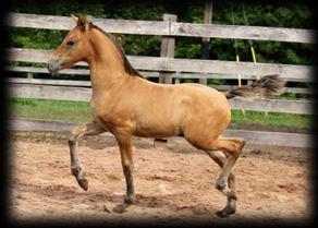 Past Foals 2016 3