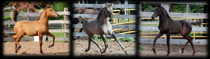 Past foals 2016 2