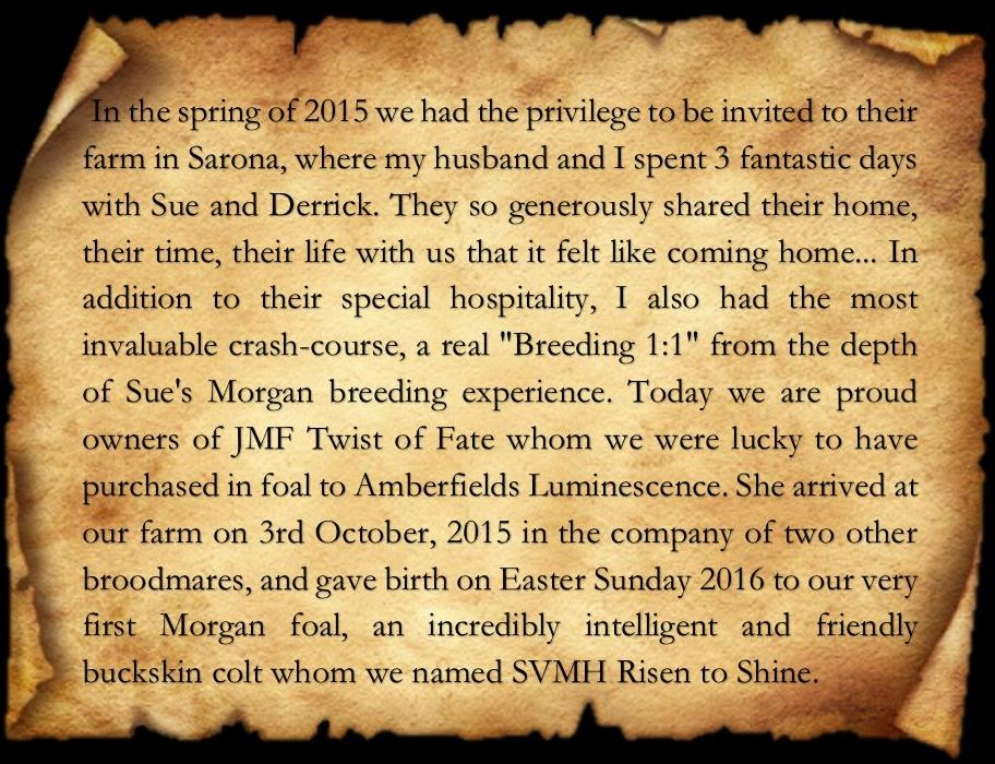 Testimonial Anna Ve2