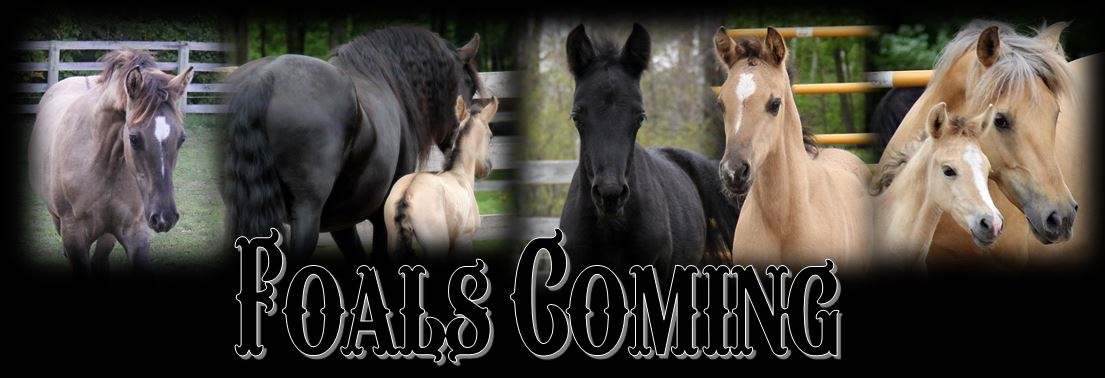 Foals coming header2019