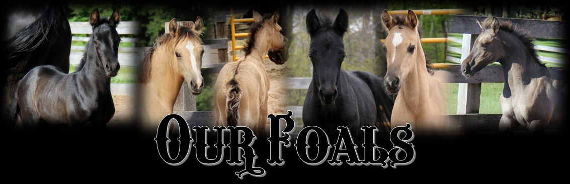 Our Foals page header