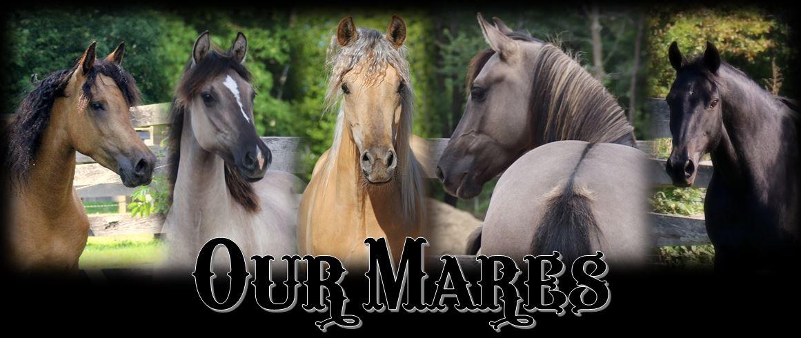 mares page header2019