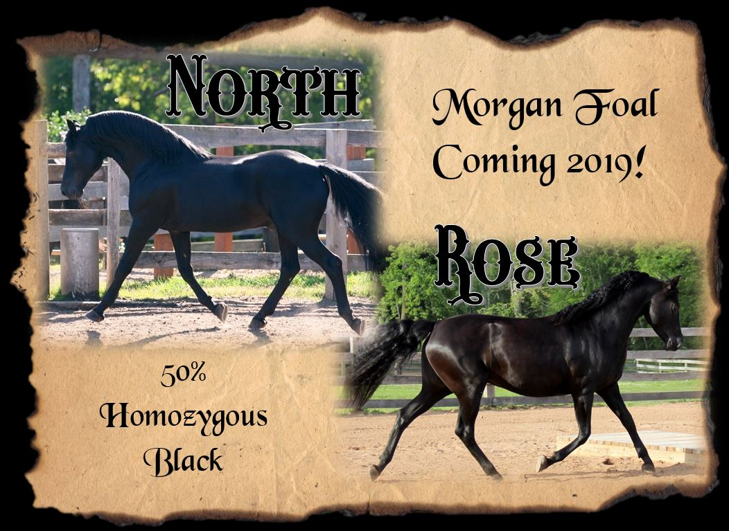 Foals coming 2019 Rose