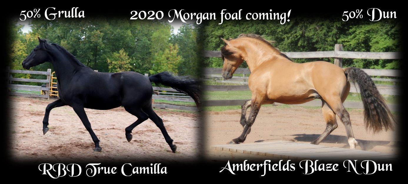 Foals Coming 2020 Camilla
