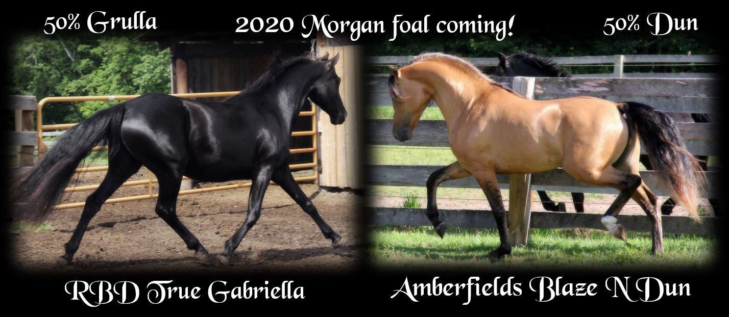 Foals Coming 2020 Gabriella