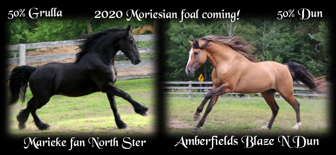 Foals coming 2020 Marieke
