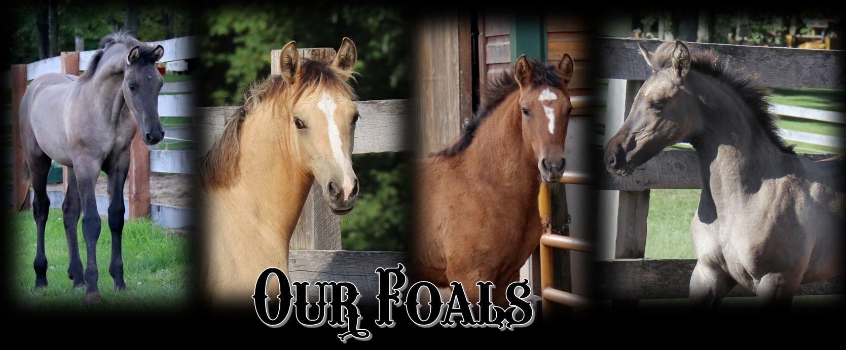 Foals header01