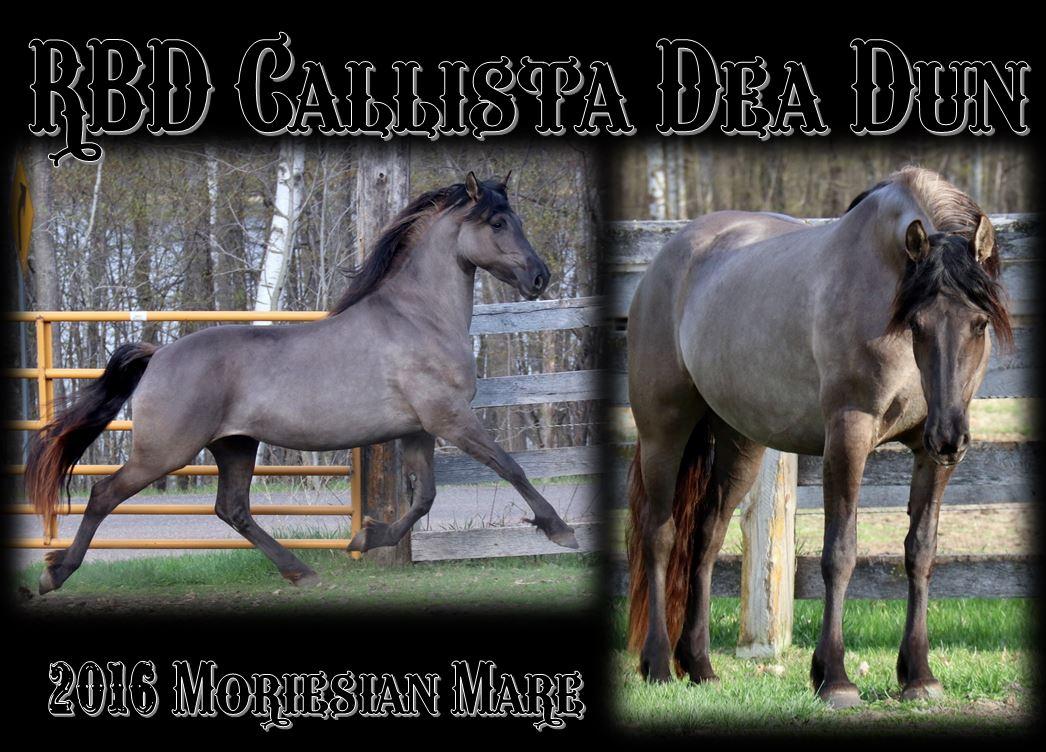 Mare Callista main 1