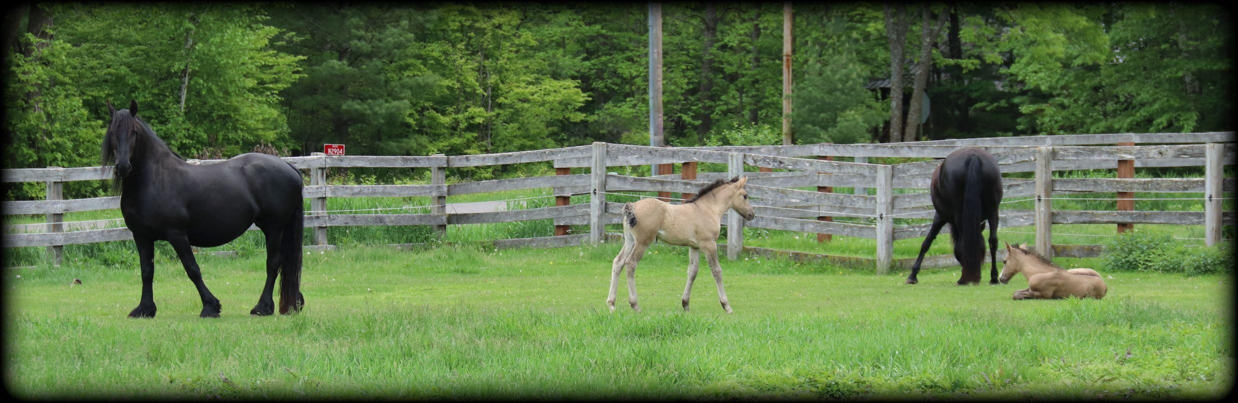 Foals 2021 01