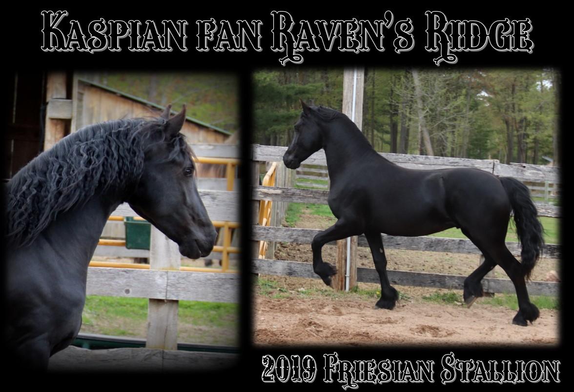 Kaspian Stallion page 2021