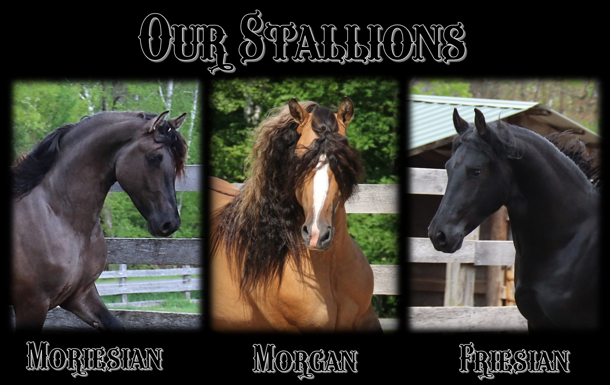 Our Stallions 2021