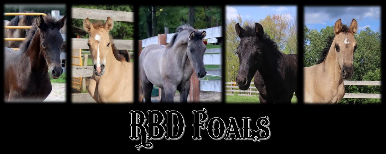 RBD Foals