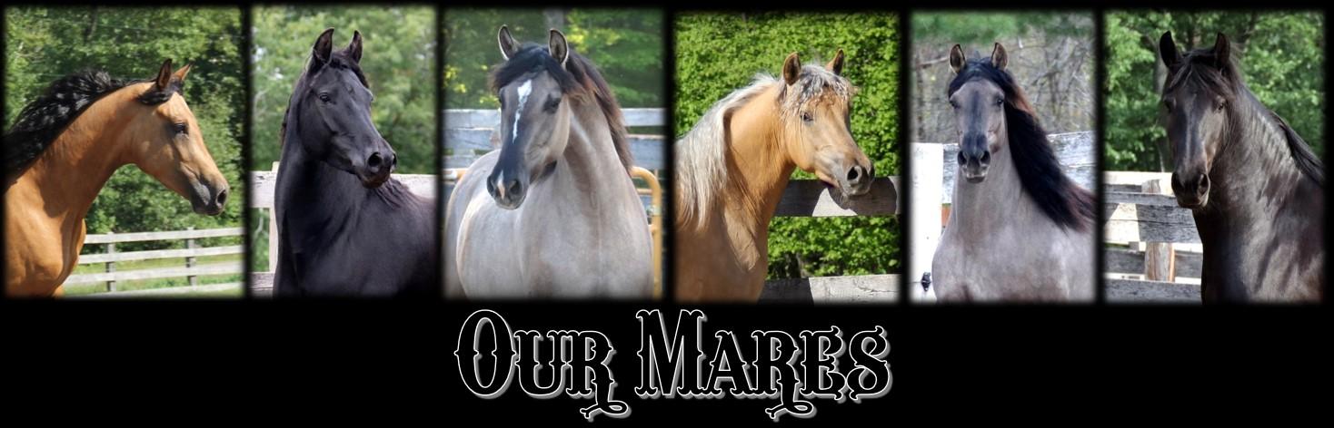 RBD mares 2