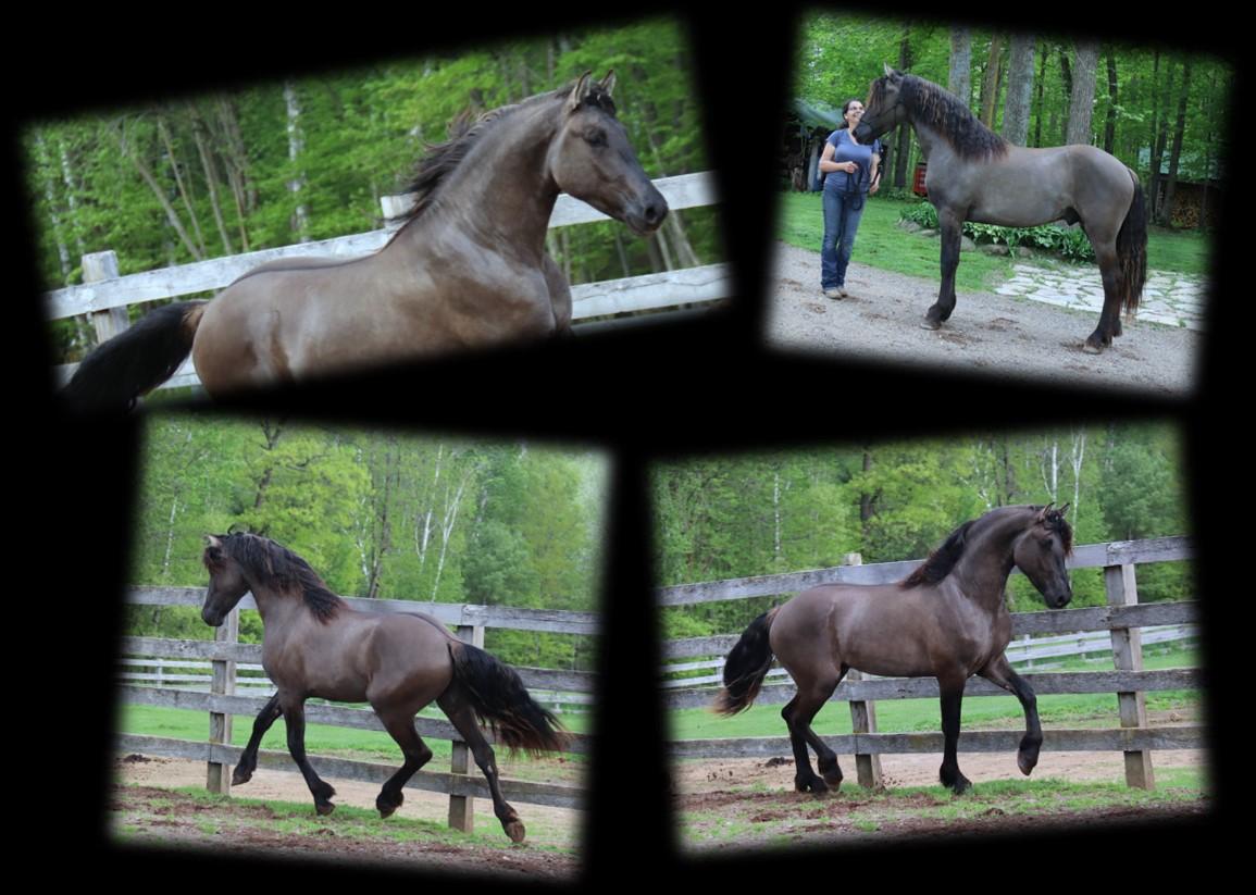 Raphael stallion page collage