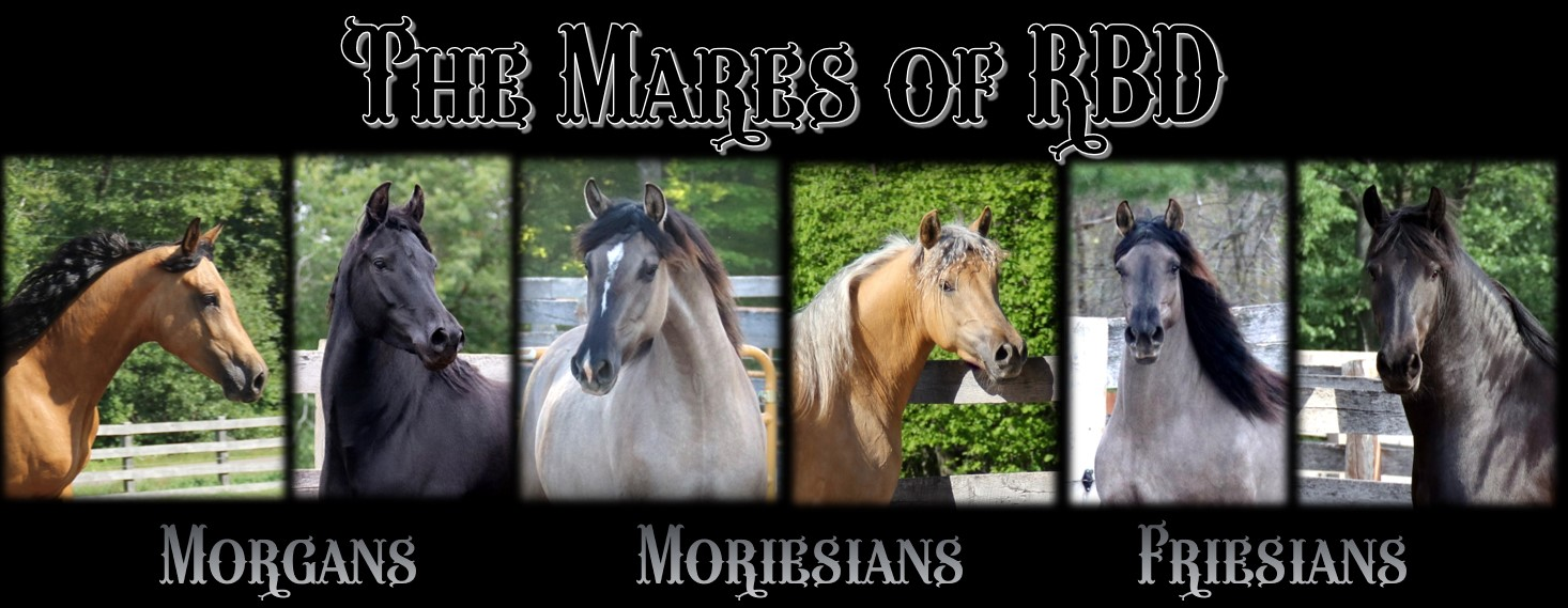 The Mares of RBD header 2