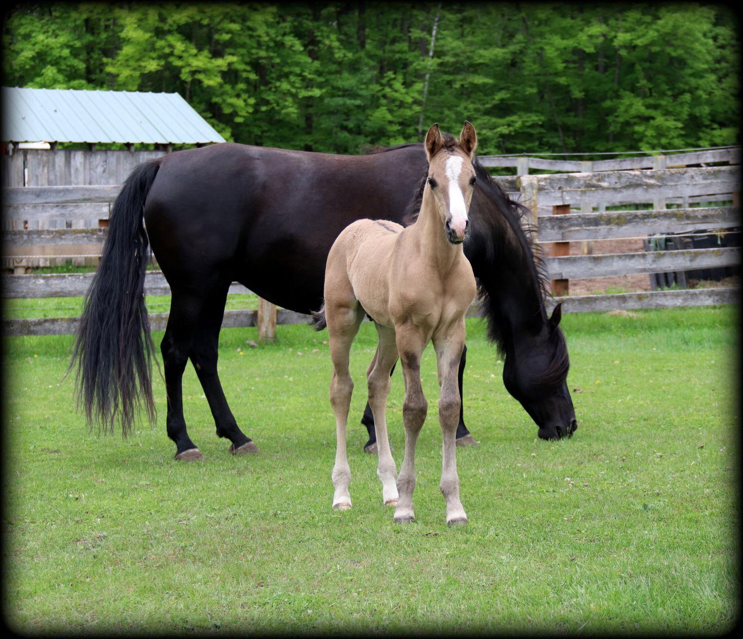 Foals 2021 3 2