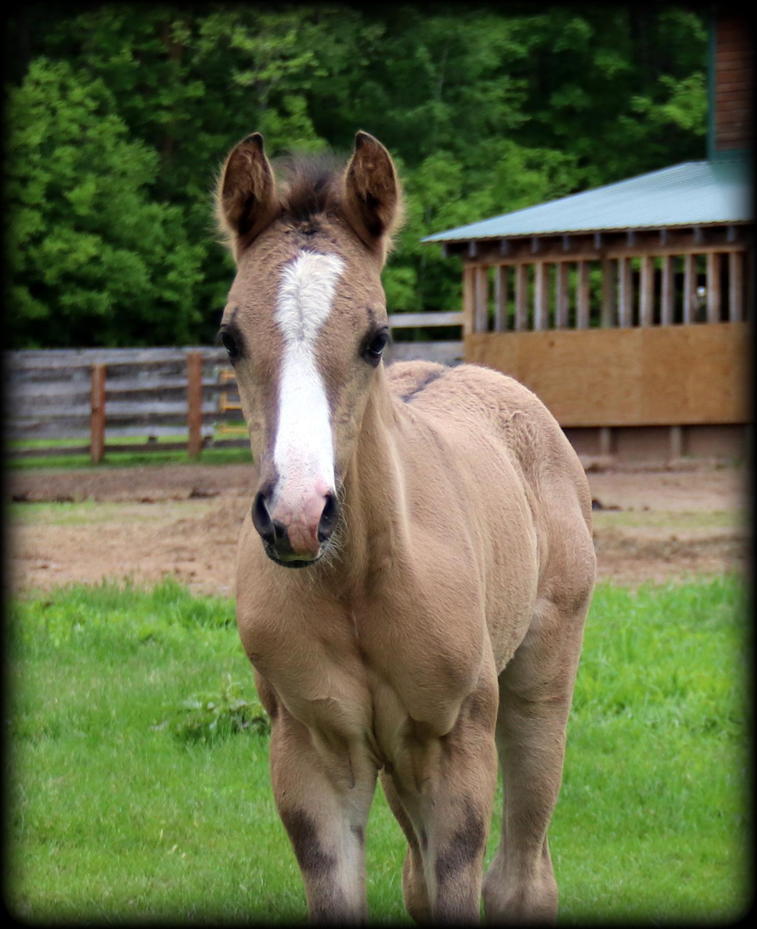 Foals 2021 8 - Copy2