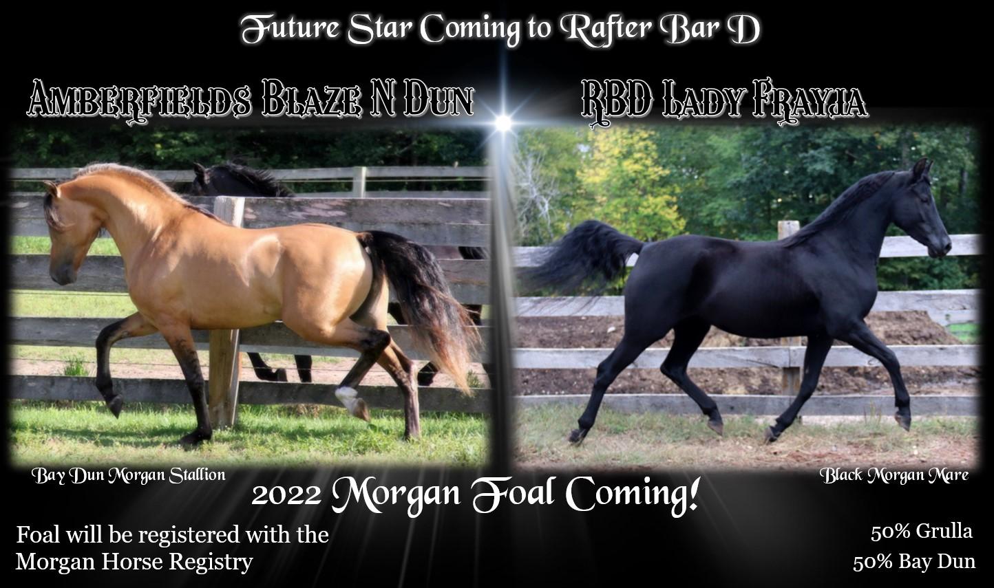 Foal coming 2022 Blaze Fray